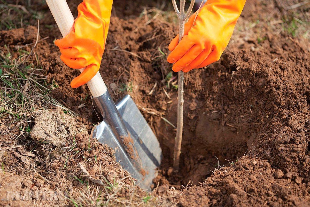 Plantarea pomilor fructiferi - sapatul gropilor